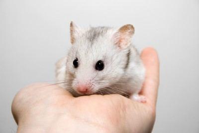 hamster on hand