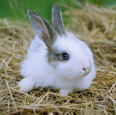 مزرعه ی پُتی ناز - بزرگترین گالری عکس خرگوش ها(قسمت اول)