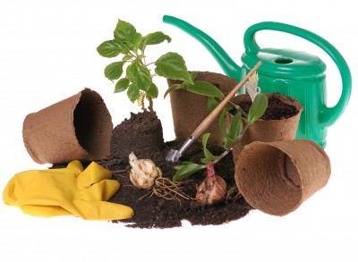 plant lesson plans