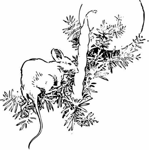 Cat Coloring Page Christmas Mouse